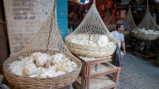 Hühner auf einem Markt in der indischen Großstadt Kalkutta