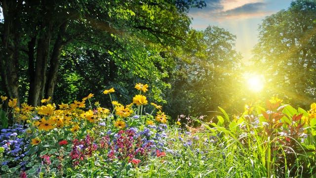 Blütenwiese im Garten