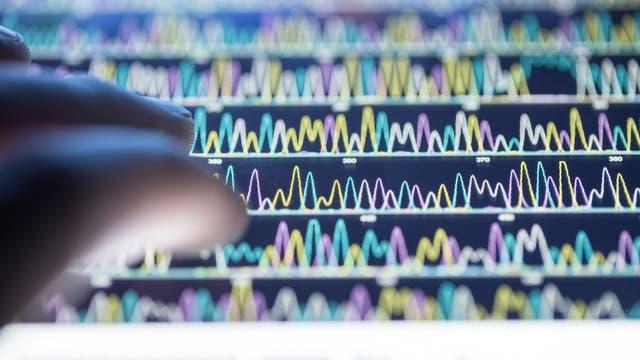 CRISPRoff ist ein Verfahren zur Stummschaltung einzelner DNA-Abschnitte