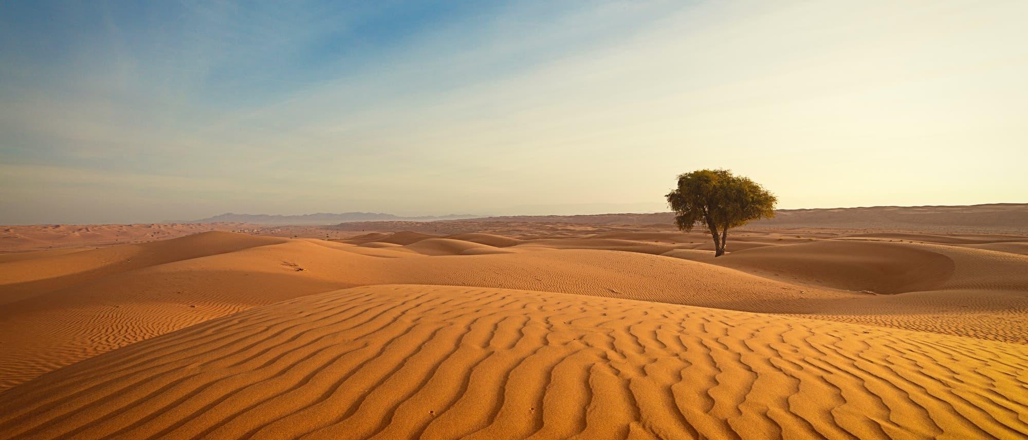 Ein einzelner Baum steht in einer Landschaft aus gelbem Sand.
