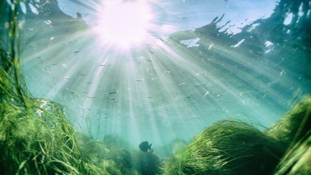 Im Meer lebt mehr als Fische und Algen