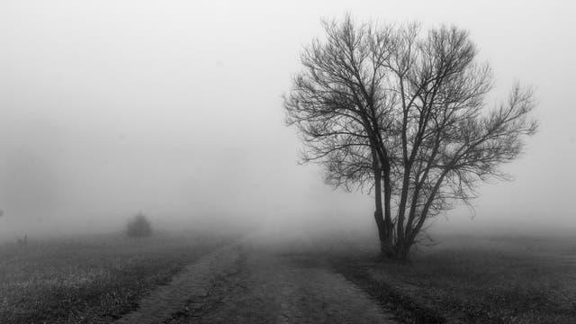 November Landschaft im Nebel