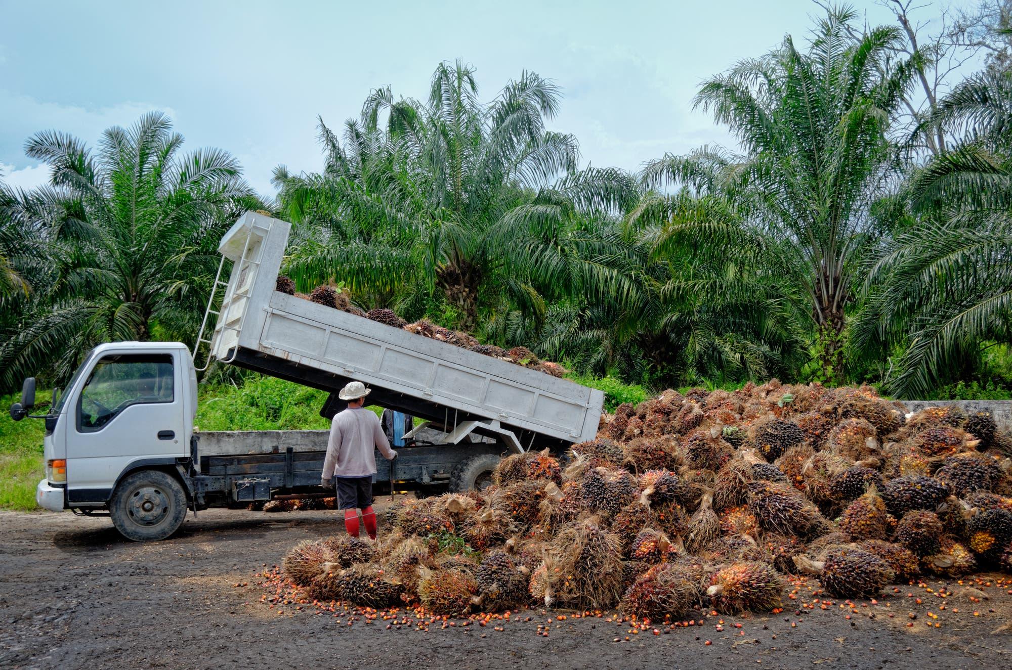 Plantagenarbeiter mit geernteten Früchten