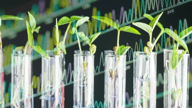 Patente auf Saatgut