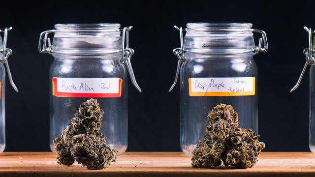 In einer Reihe von Einmachgläsern kann man verschiedene Sorten Cannabis sehen.