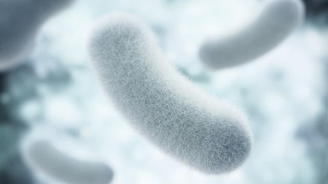 Probiotische Bakterien