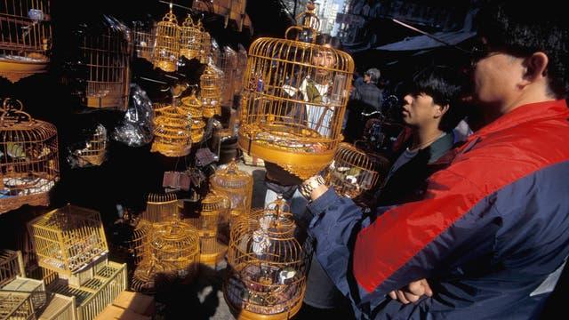 Vogelmarkt in Kowloon, Hongkong