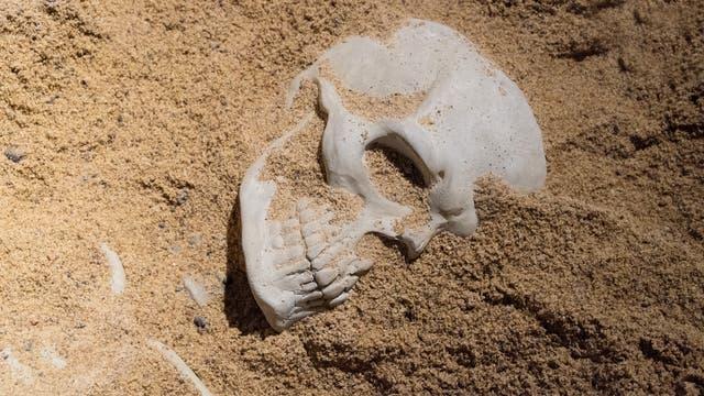Menschlicher Schädel im Sand