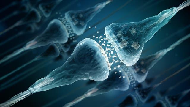 Synapsen beim Ausschütten von Neurotransmittern (Illustration)