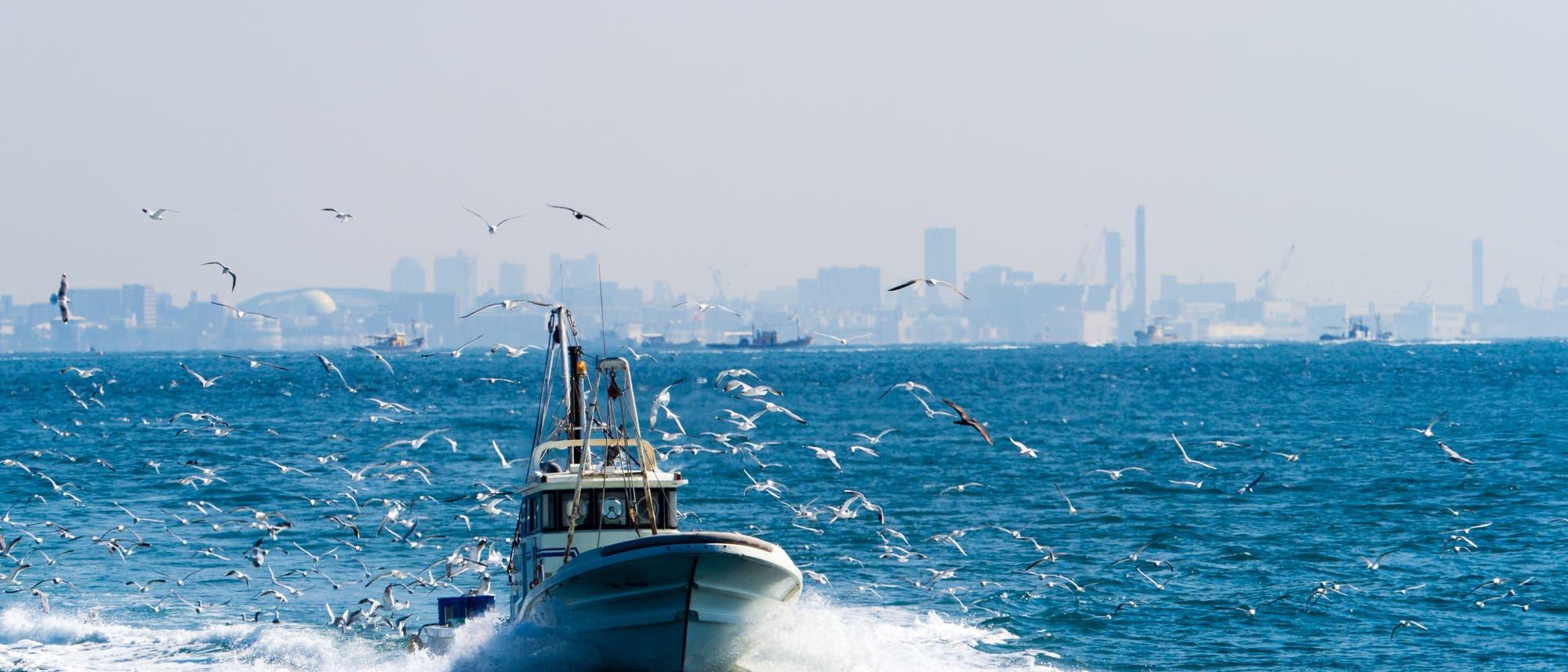 Ein kleines Motorboot umgeben von Möwen. Im Hintergrund eine Großstadt.