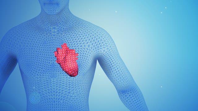 Die Illustration zeigt ein menschliches Herz.