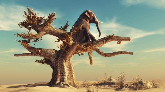 Ein Elefant auf einem Baum betrachtet die Landschaft