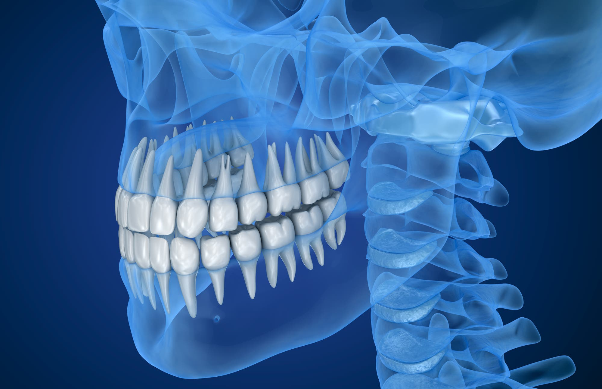 Ein transparenter Schädel mit hervorgehobenen Zähnen
