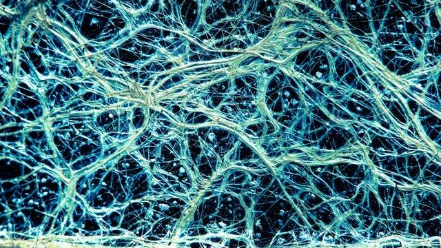 Netzwerk Wurzel