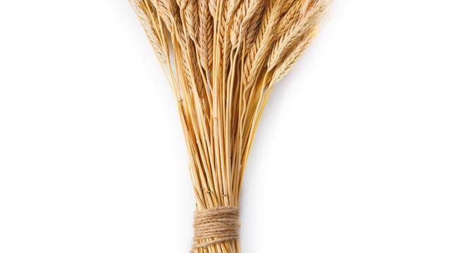 gebundene reife Weizenähren