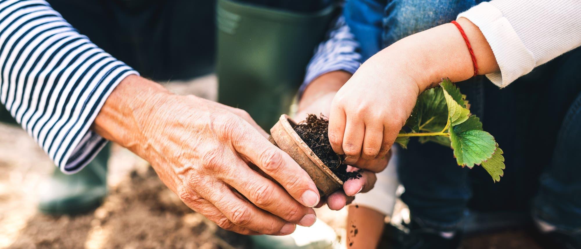 Älterer Mensch hilft Kind beim Gärtnern