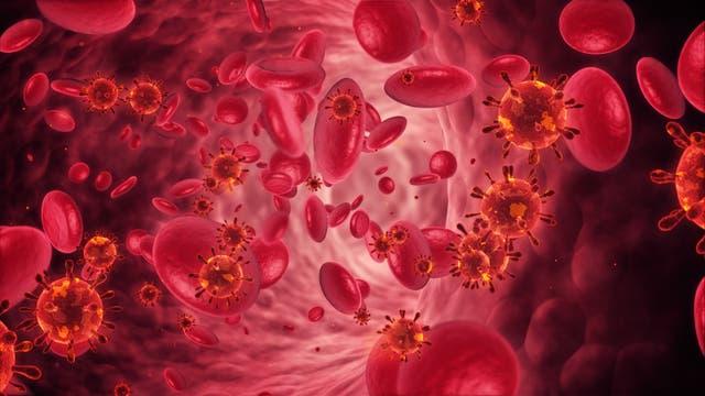 Viren in der Blutbahn