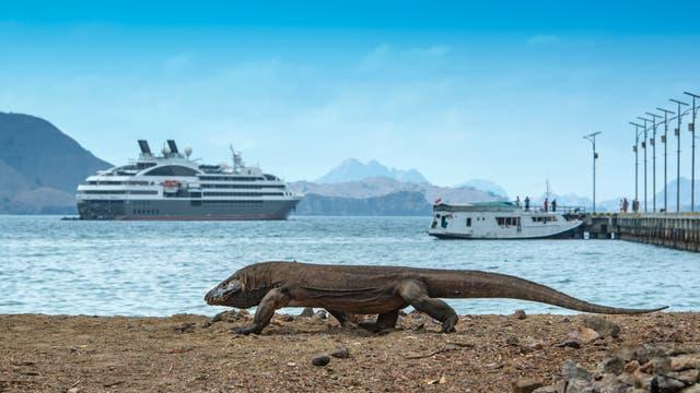 Komodowaran vor Kreuzfahrtschiffen