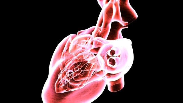 MRT-Scan eines menschlichen Herzens