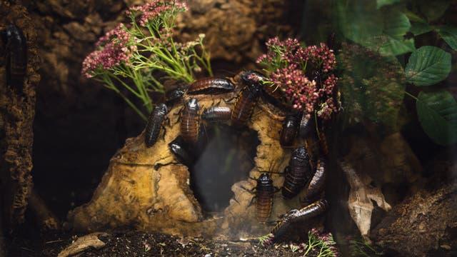 Insekten im Terrarium (Symbolbild)