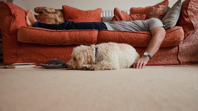 Schlafender Mann auf Sofa mit Hund davor