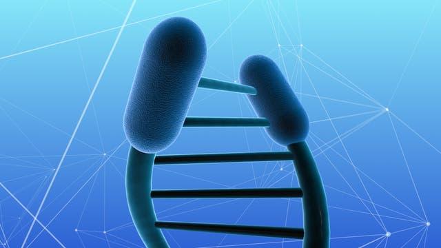 Symbolische Darstellung von Schutzkappen an der DNA