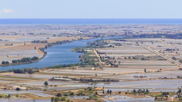 Überflutete Reisfelder im Ebro-Delta