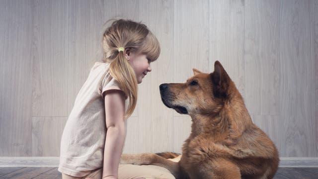 Ein Mädchen und ein Hund sitzen sich gegenüber und schauen einander an