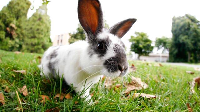 Kaninchen auf Schnuppertour im Park