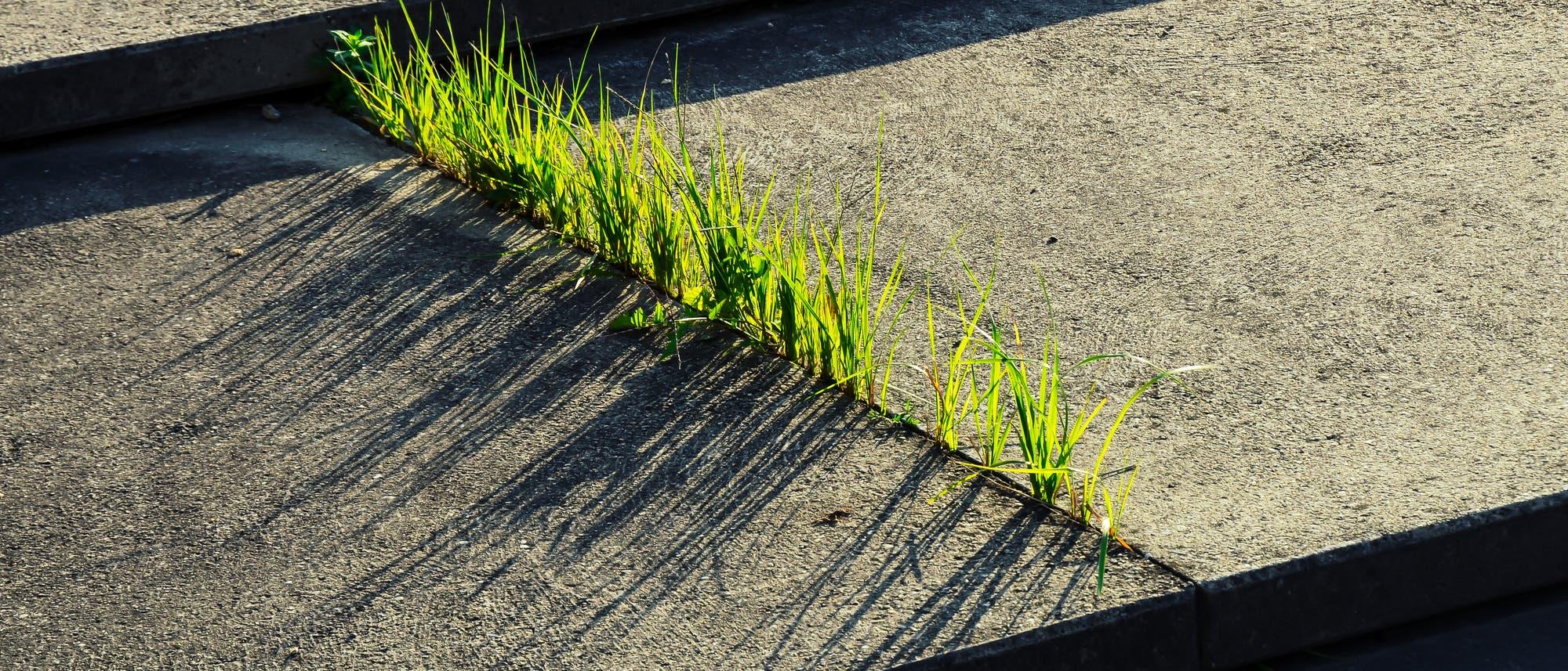 Gras zwischen Steinplatten
