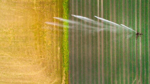 Bewässerungssystem auf einem Weizenfeld