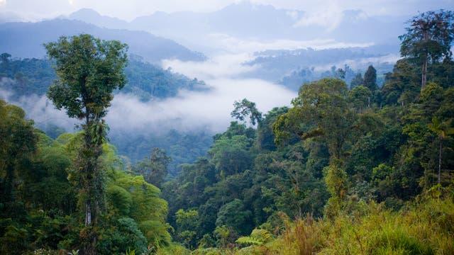 Nebelwälder gibt es zum Beispiel in Ecuador.