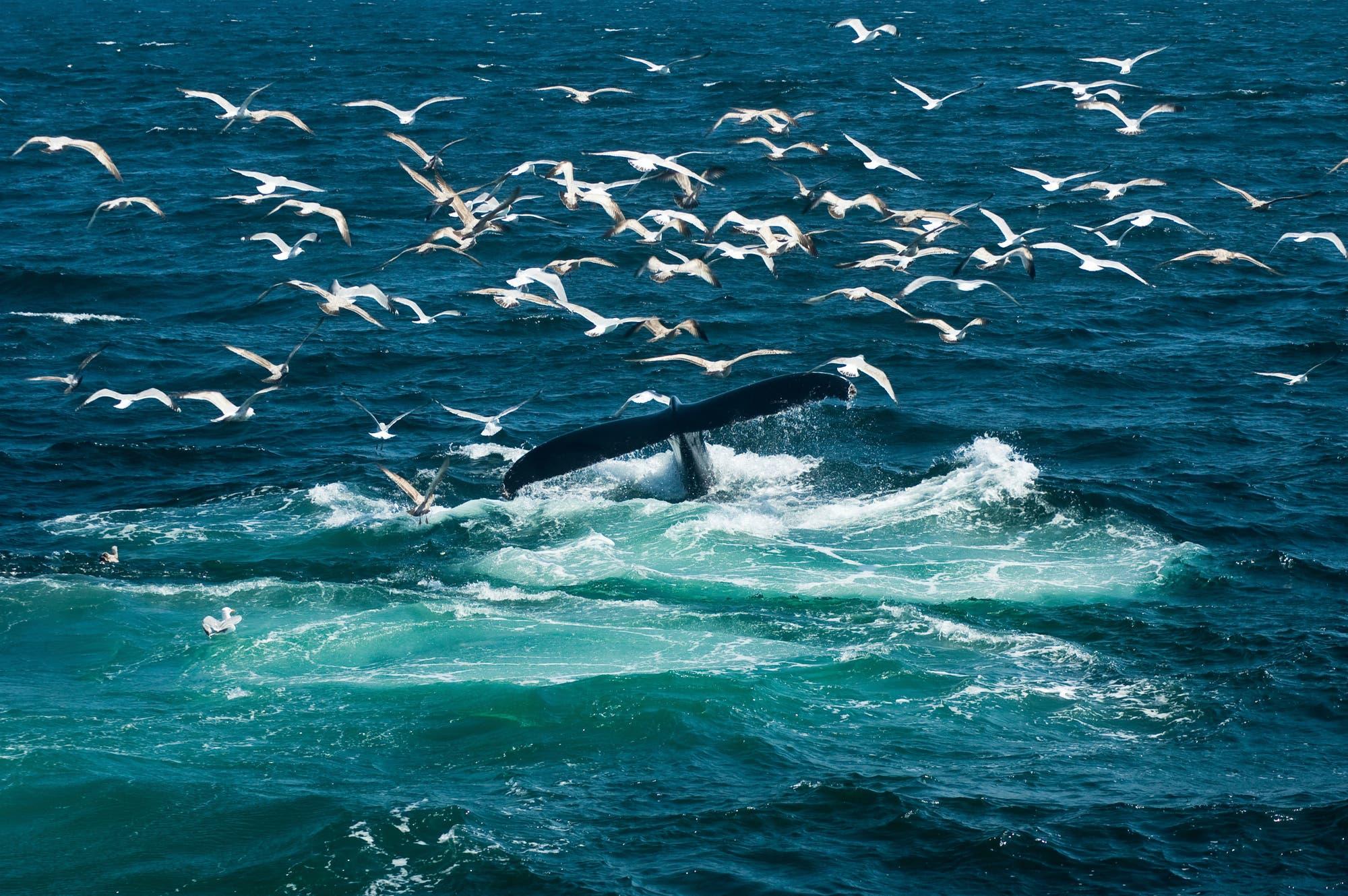Wale füttern ganze Ökosysteme