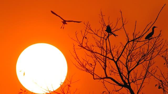 Sonnenuntergang in Indien