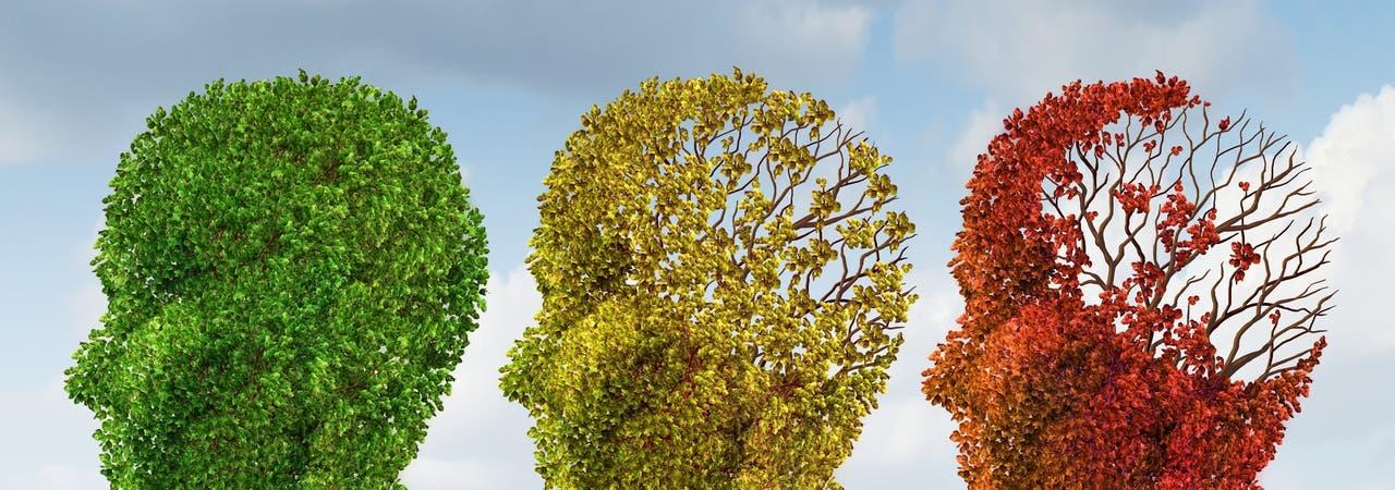 Symbolbild Gedächtnisverlust: Bäume in Kopfform entblättern mehr und mehr