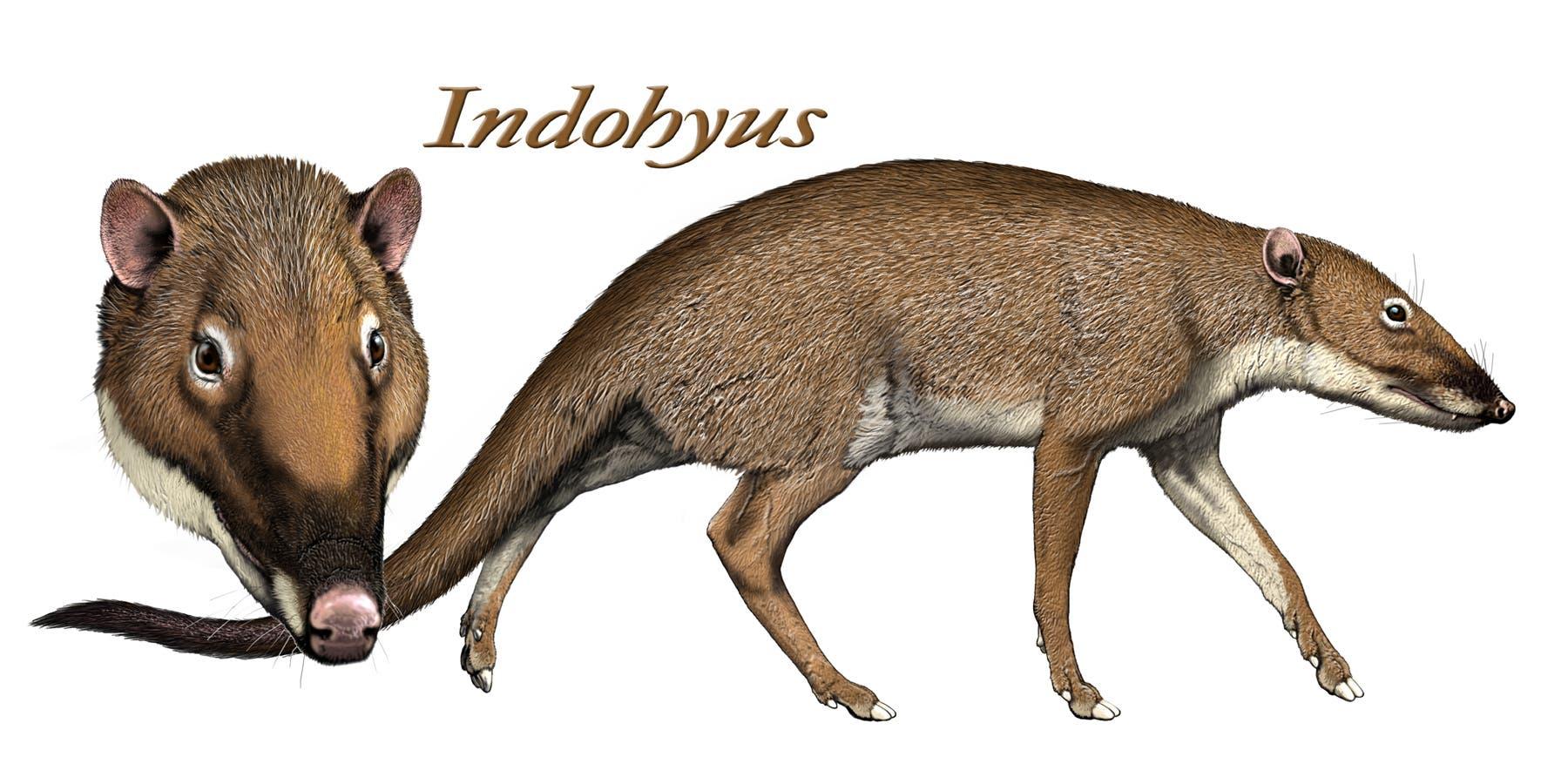 <em>Indohyus</em>