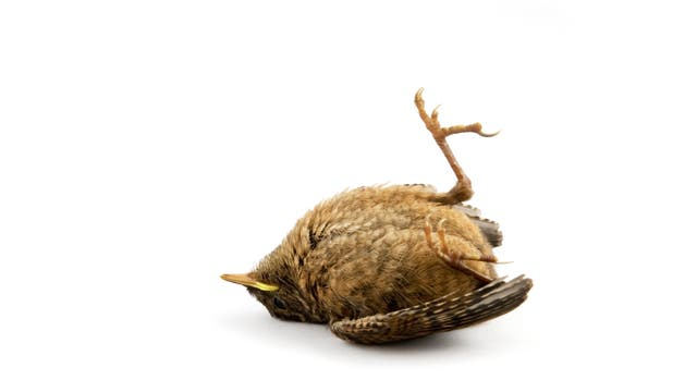 Toter Jungvogel