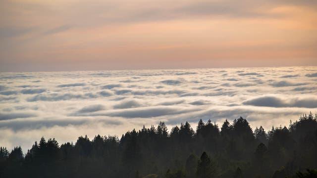 Wald über Wolken