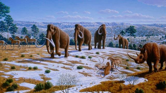 Zeichnung mit Mammuts, Wollnashorn, Säbelzahntigern und Pferden