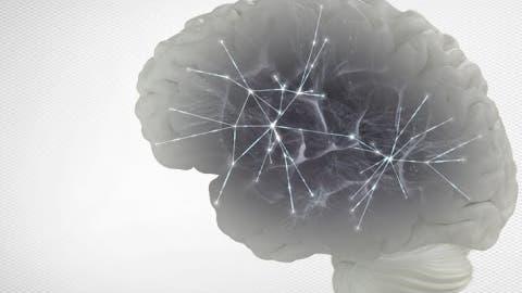 Netzwerke im Gehirn