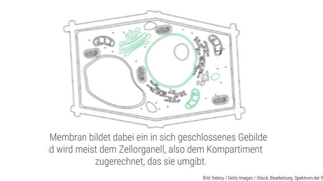 Wozu dient die Kompartimentierung einer Zelle?