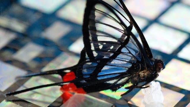 Schmetterling auf Sensorhaut