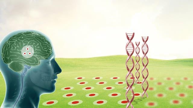 Ein genetisch erhöhtes Alzheimerrisiko geht mit einer verminderten Aktivität der Grid-Zellen beim Navigieren einher