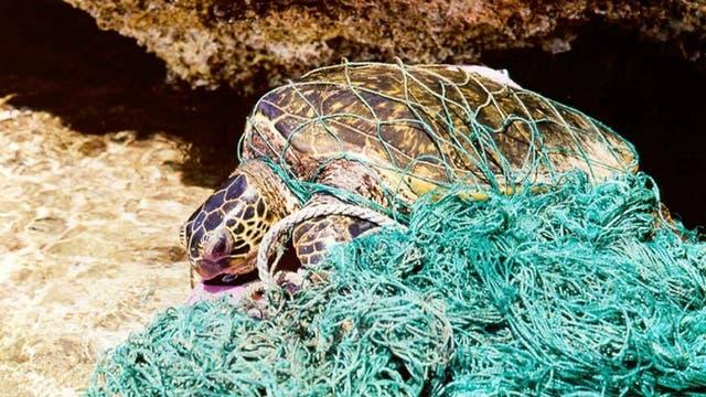 Tote Schildkröte