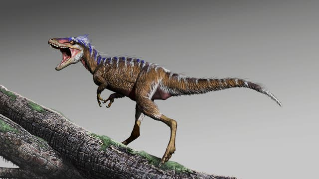 Neu entdeckter Dinosaurier in Lebendrekonstruktion