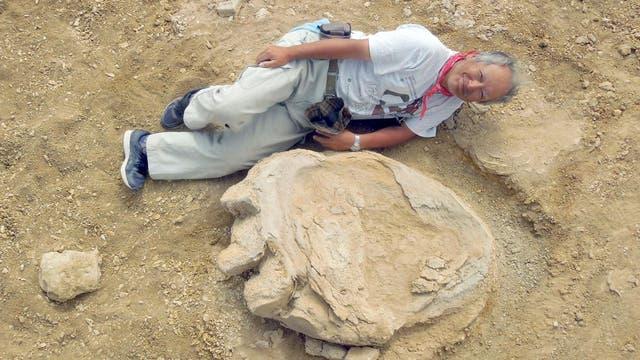Fußabdruck des Titanosauriers