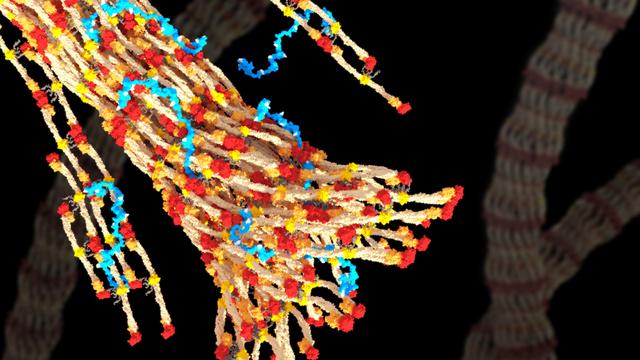 Fördert die Blutgerinnung: Biopolymer