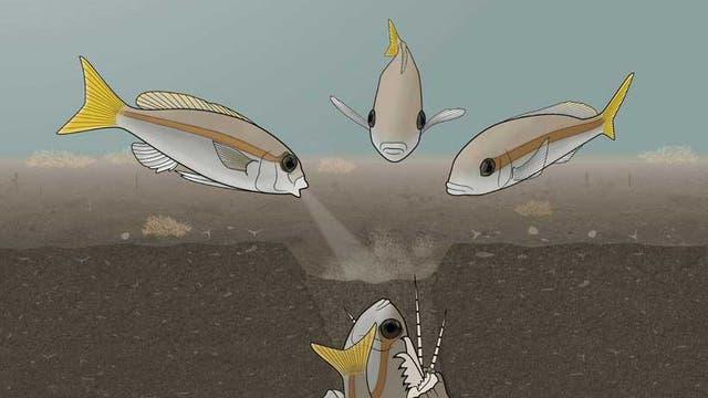 Fische attackieren den Bobbitwurm (Zeichnung)
