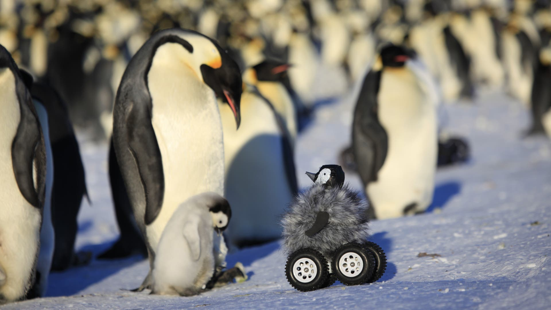 Perfekt getarnter Pinguinroboter