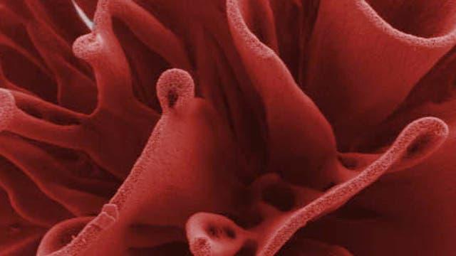 Ausschnitt einer Nanorose